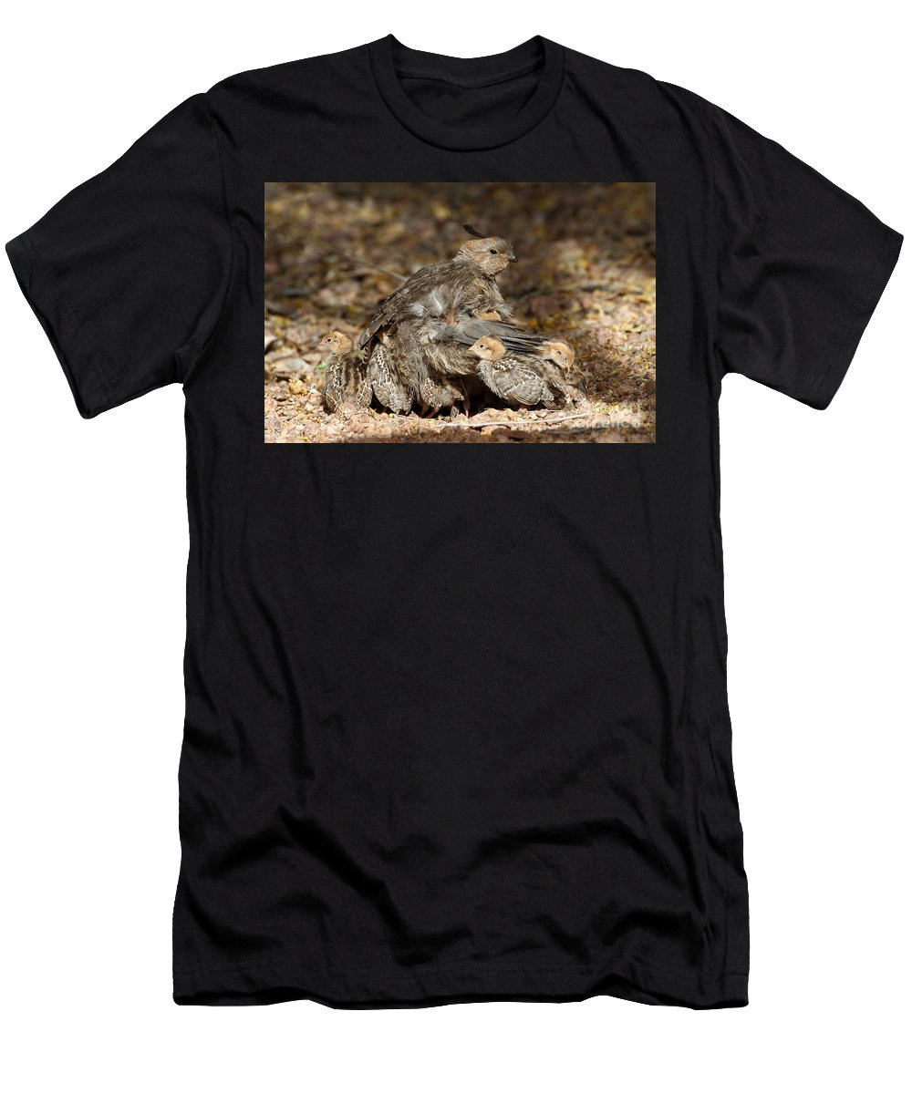 Quail Men's T-Shirt (Athletic Fit) featuring the photograph Your Safe Now by Bryan Keil