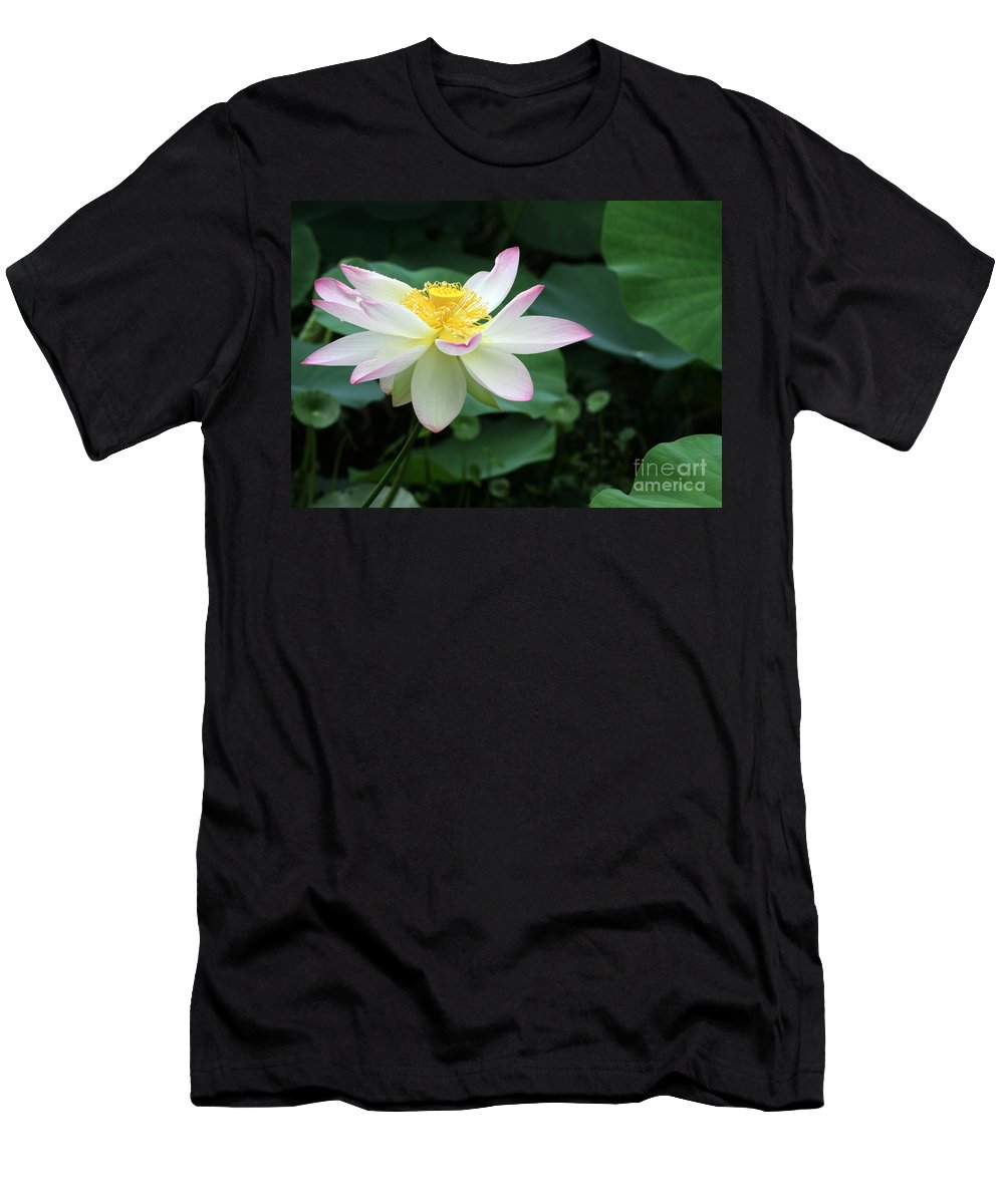 Lotus Men's T-Shirt (Athletic Fit) featuring the photograph A Pink Tipped White Lotus by Sabrina L Ryan