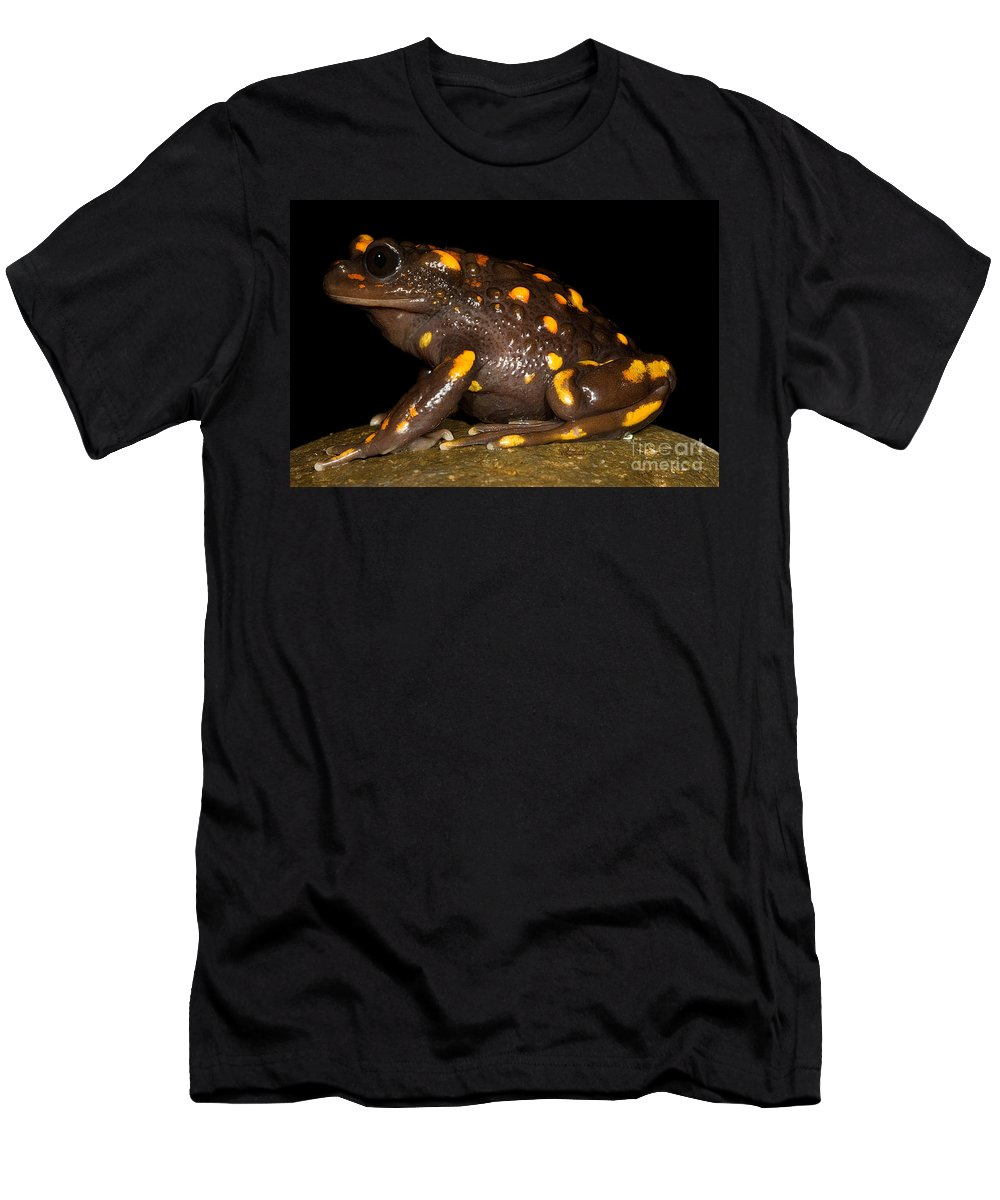 Telmatobufo Venustus Men's T-Shirt (Athletic Fit) featuring the photograph Chilean Mountains False Toad by Dant� Fenolio