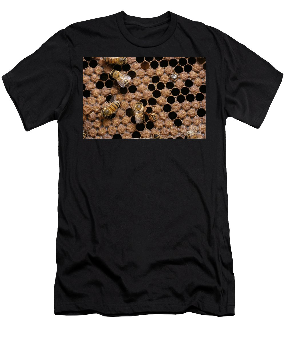 Bee Men's T-Shirt (Athletic Fit) featuring the photograph Honey Bees by Raul Gonzalez Perez