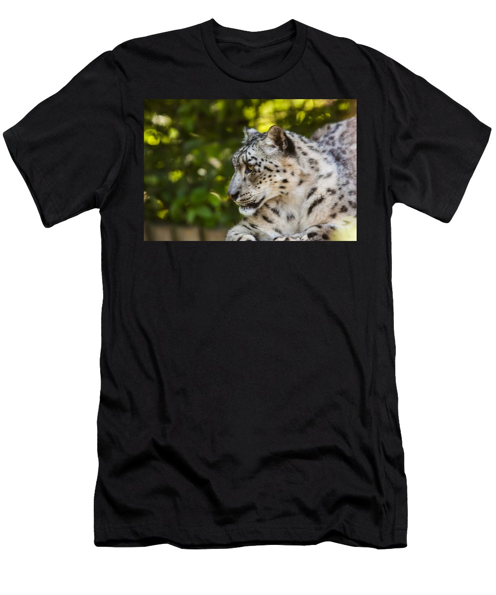 Dawn Oconnor Dawnoconnorphotos@gmail.com Men's T-Shirt (Athletic Fit) featuring the photograph Snow Leopard by Dawn OConnor