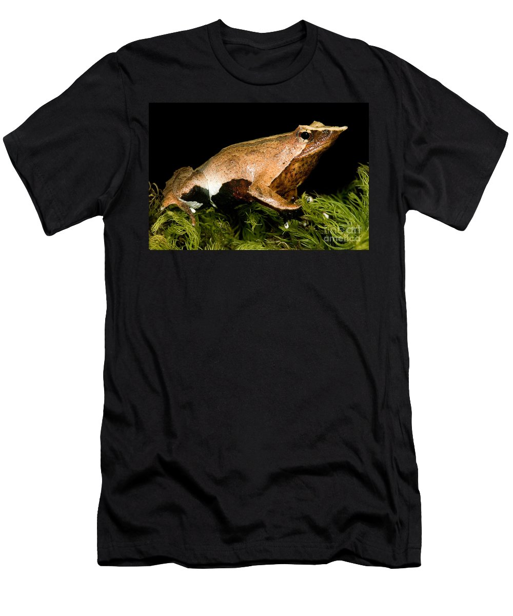 Darwin's Frogs Men's T-Shirt (Athletic Fit) featuring the photograph Darwins Frog by Dant� Fenolio