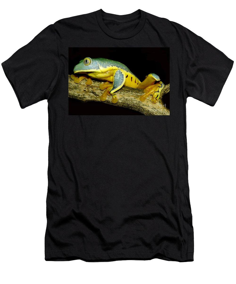 Cruziohyla Calcarifer Men's T-Shirt (Athletic Fit) featuring the photograph Splendid Leaf Frog by Dante Fenolio