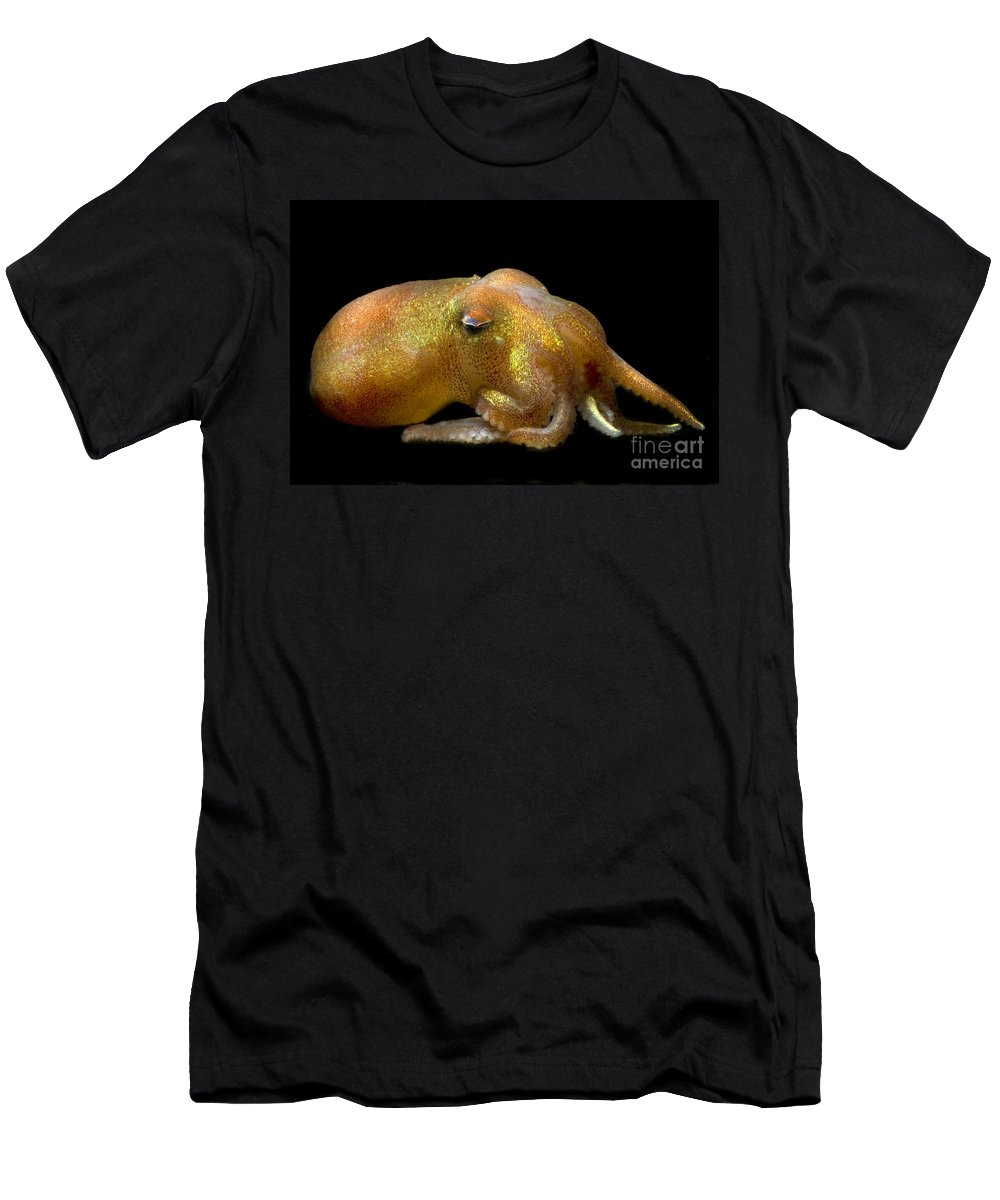 Rossia Pacifica Men's T-Shirt (Athletic Fit) featuring the photograph Stubby Squid by Dante Fenolio