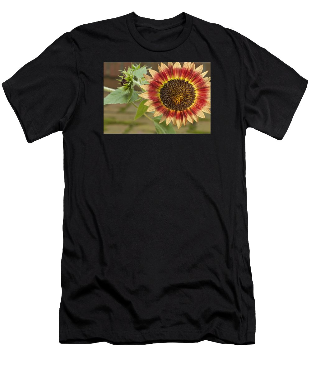Agriculture Men's T-Shirt (Athletic Fit) featuring the photograph Sunflower by Jack R Perry
