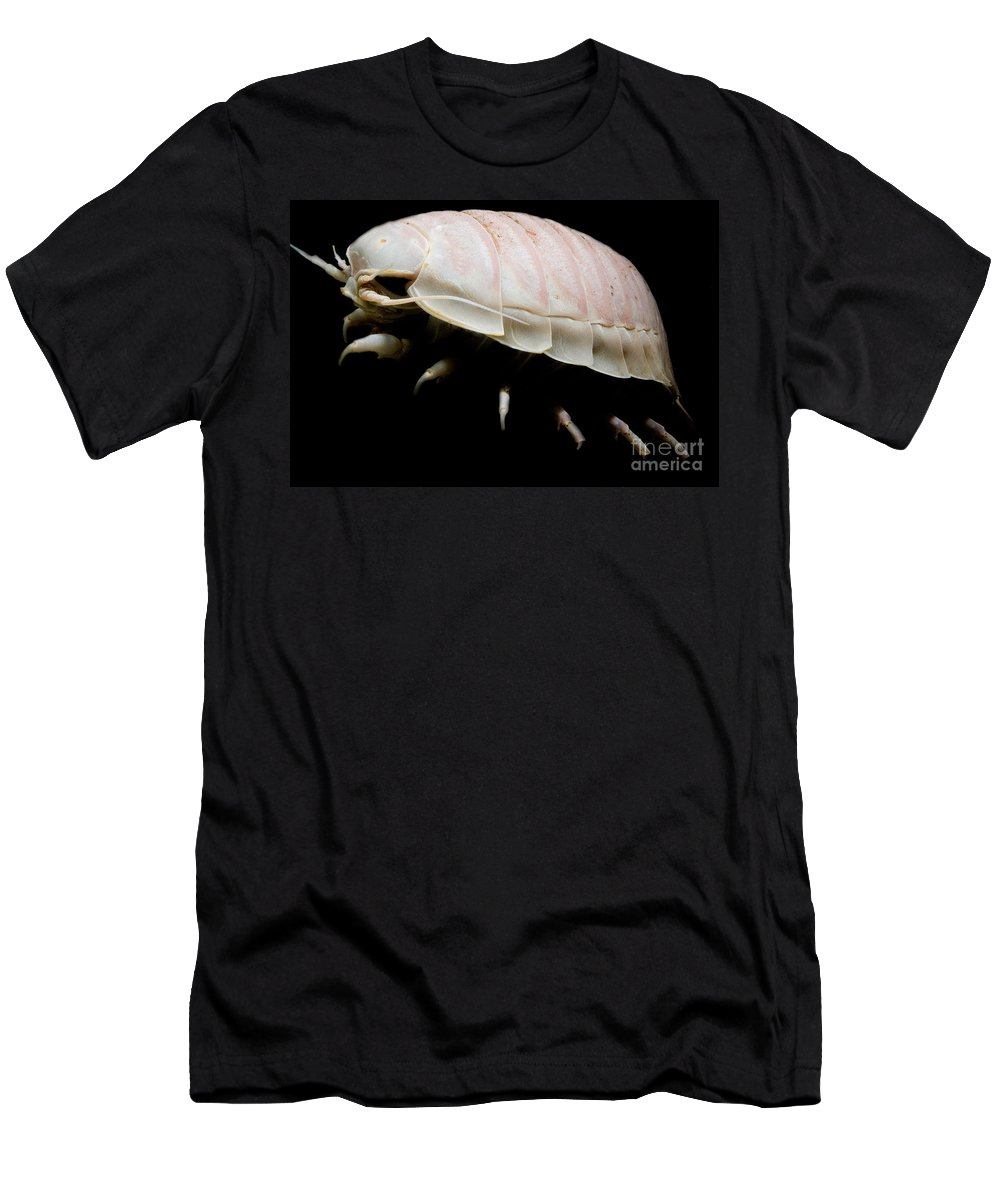 Giant Deep Sea Isopod Men's T-Shirt (Athletic Fit) featuring the photograph Giant Marine Isopod by Dant� Fenolio