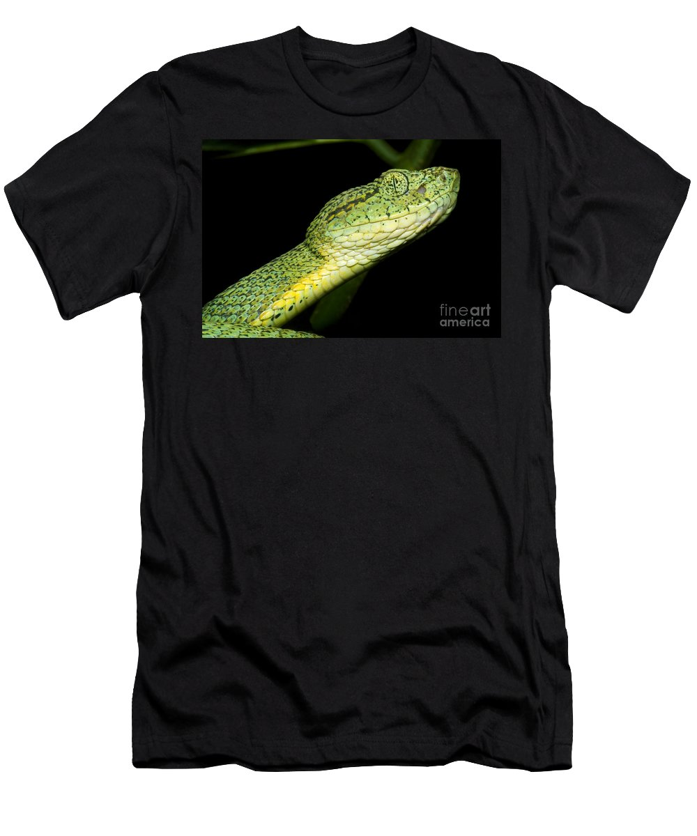 Bothriopsis Bilineata Smaragdin Men's T-Shirt (Athletic Fit) featuring the photograph Two Striped Forest Pit Viper by Dante Fenolio