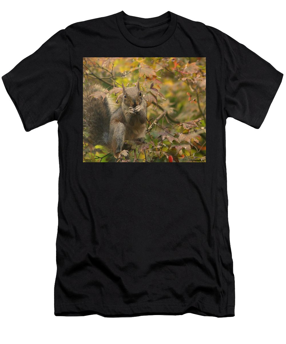 Nature Men's T-Shirt (Athletic Fit) featuring the photograph Squirrel Dinner by Valia Bradshaw