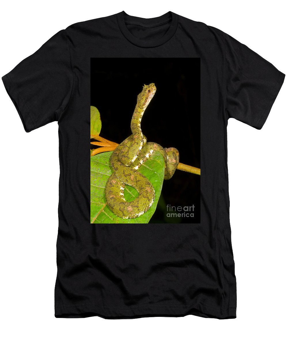 Eyelash Viper Men's T-Shirt (Athletic Fit) featuring the photograph Eyelash Viper by Dante Fenolio