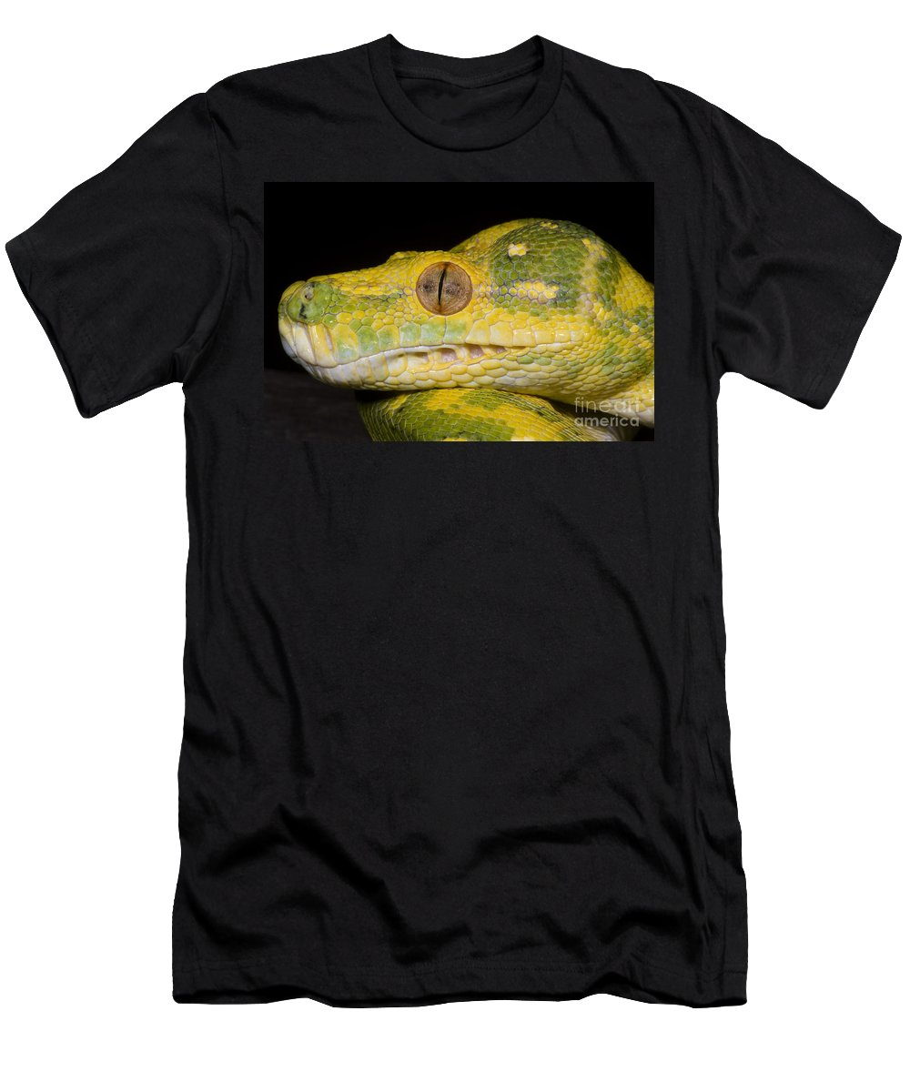 Green Tree Python Men's T-Shirt (Athletic Fit) featuring the photograph Green Tree Python by Dante Fenolio