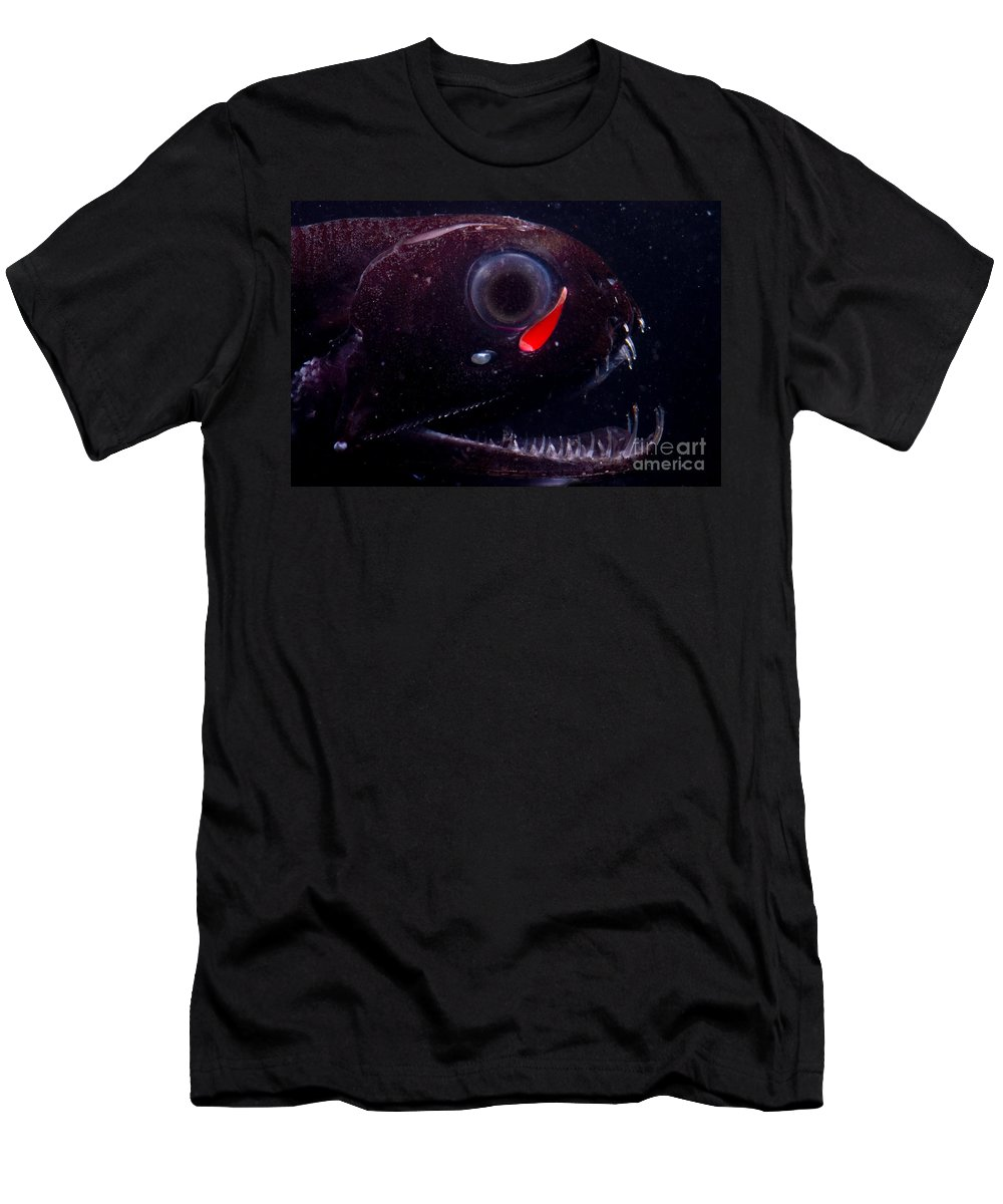 Pachystomias Men's T-Shirt (Athletic Fit) featuring the photograph Dragonfish by Dante Fenolio