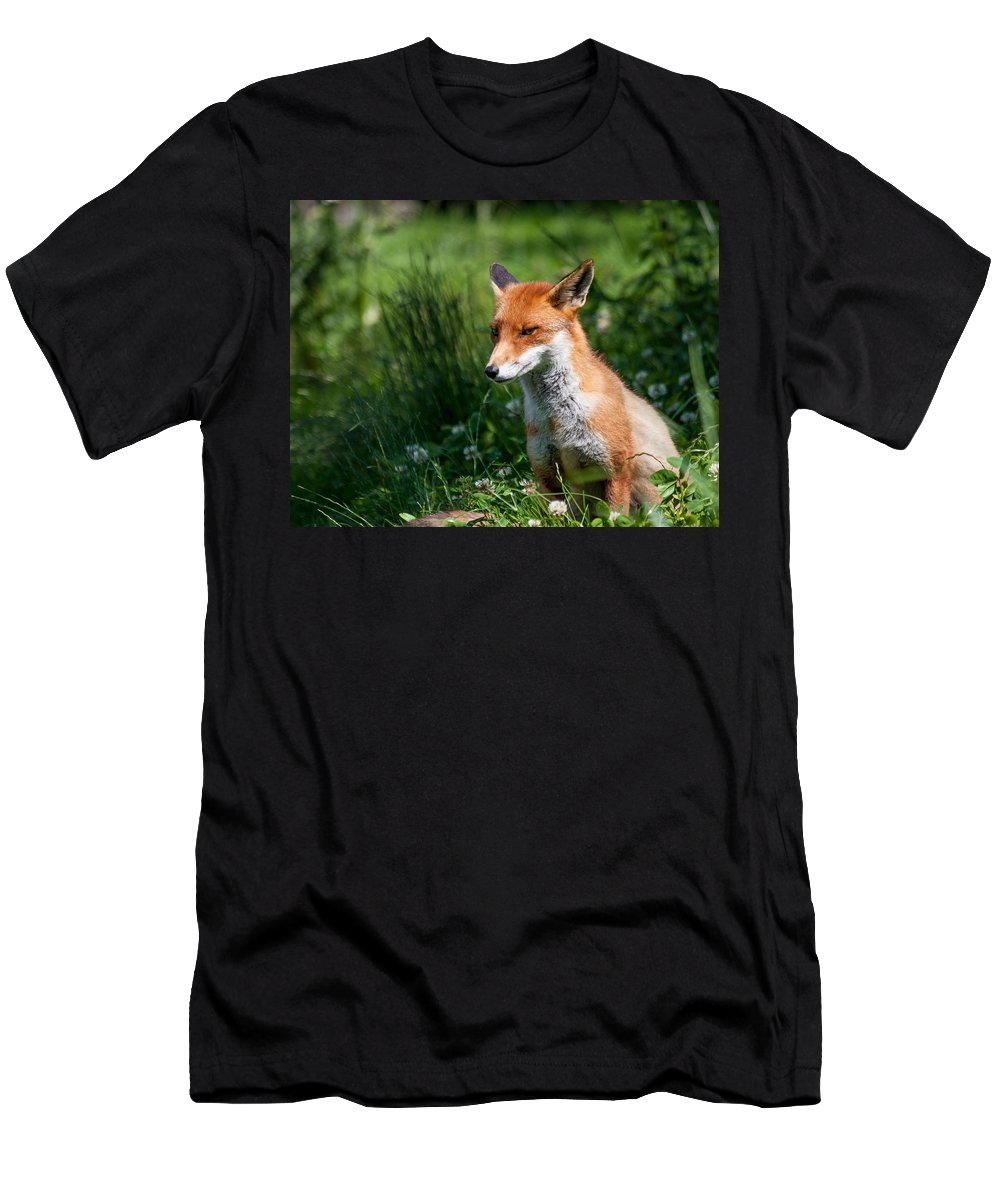 British Wildlife Centre Men's T-Shirt (Athletic Fit) featuring the photograph A British Red Fox by Dawn OConnor