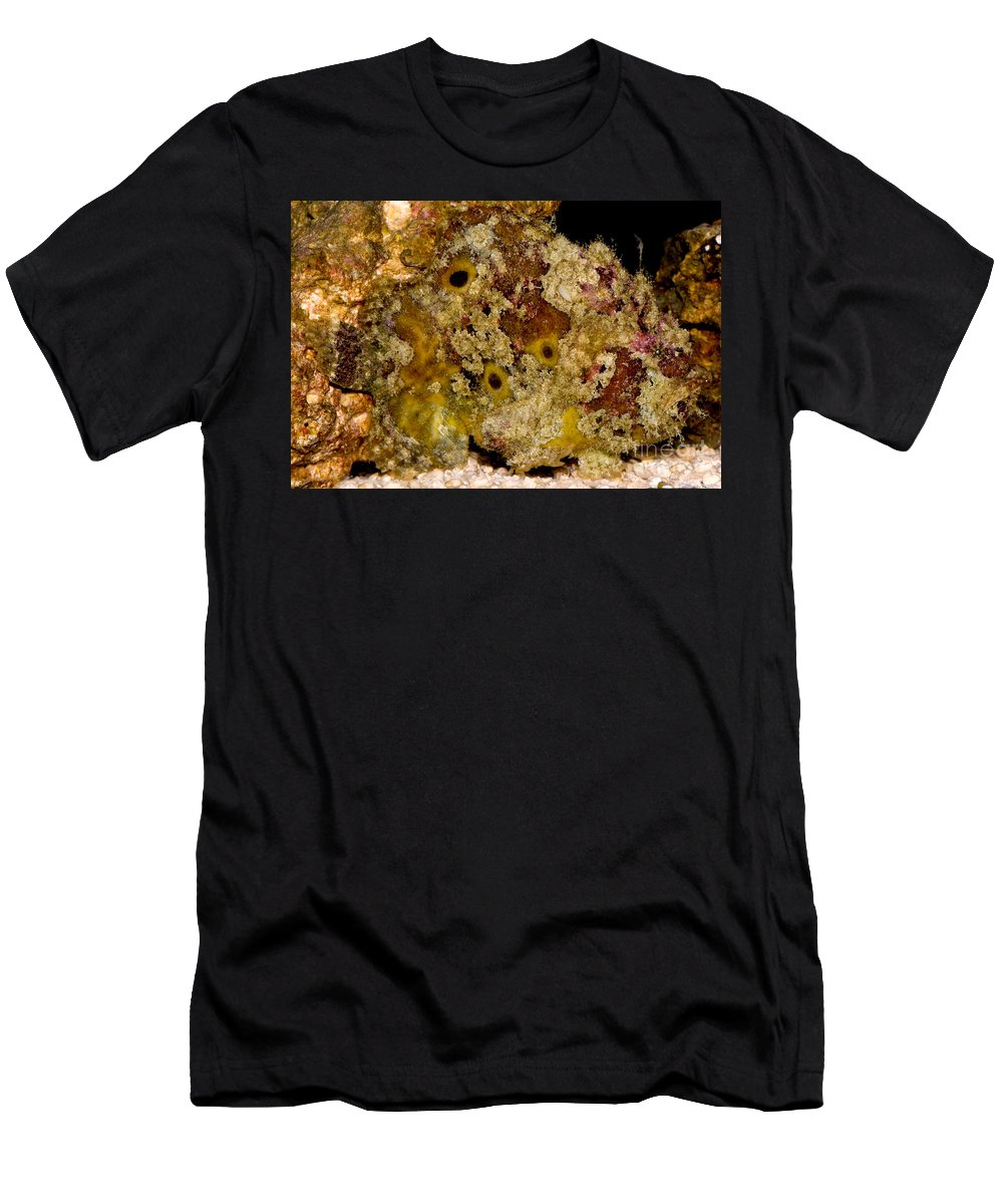 Antennarius Men's T-Shirt (Athletic Fit) featuring the photograph Frogfish by Dant� Fenolio