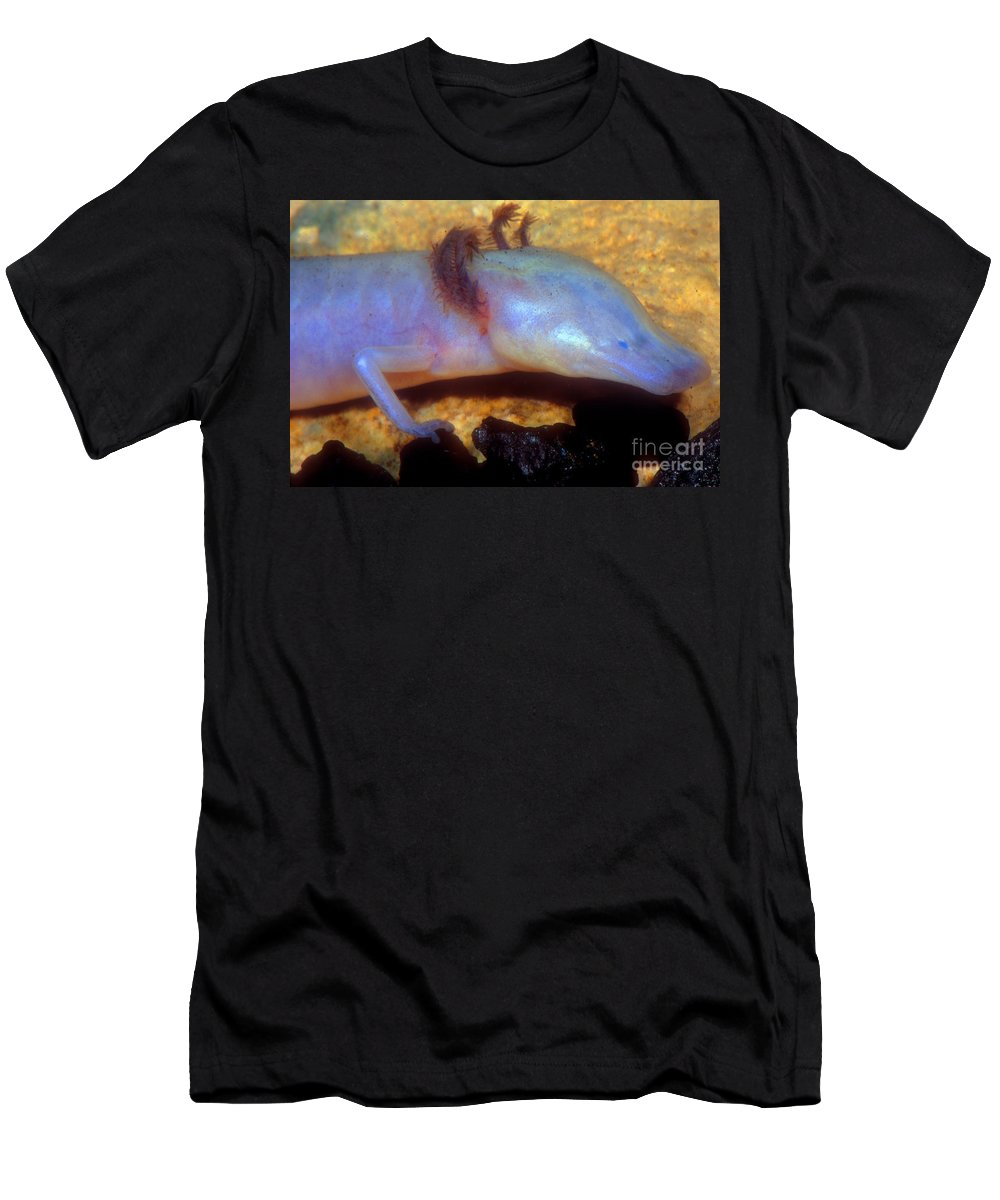 Texas Blind Salamander Men's T-Shirt (Athletic Fit) featuring the photograph Texas Blind Salamander by Dante Fenolio