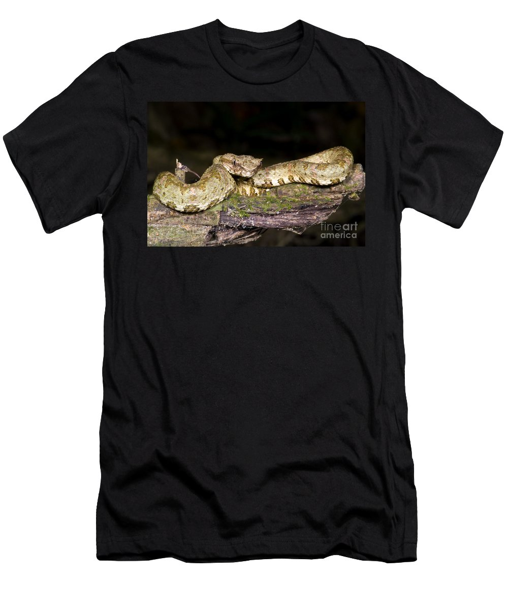 Eyelash Viper Men's T-Shirt (Athletic Fit) featuring the photograph Eyelash Viper by Dante Fenolio