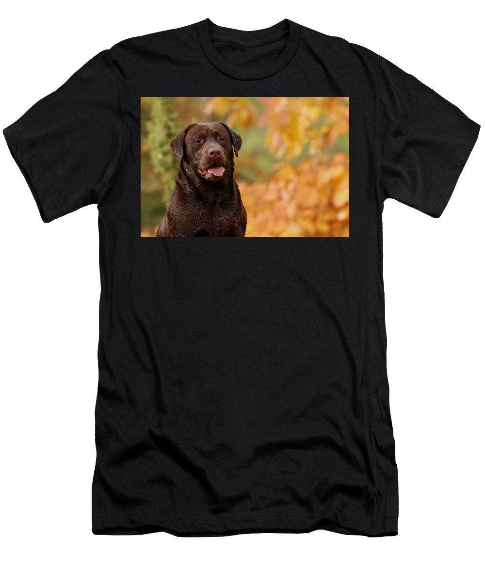 Animal Men's T-Shirt (Athletic Fit) featuring the photograph Autumn Chocolate by Waldek Dabrowski