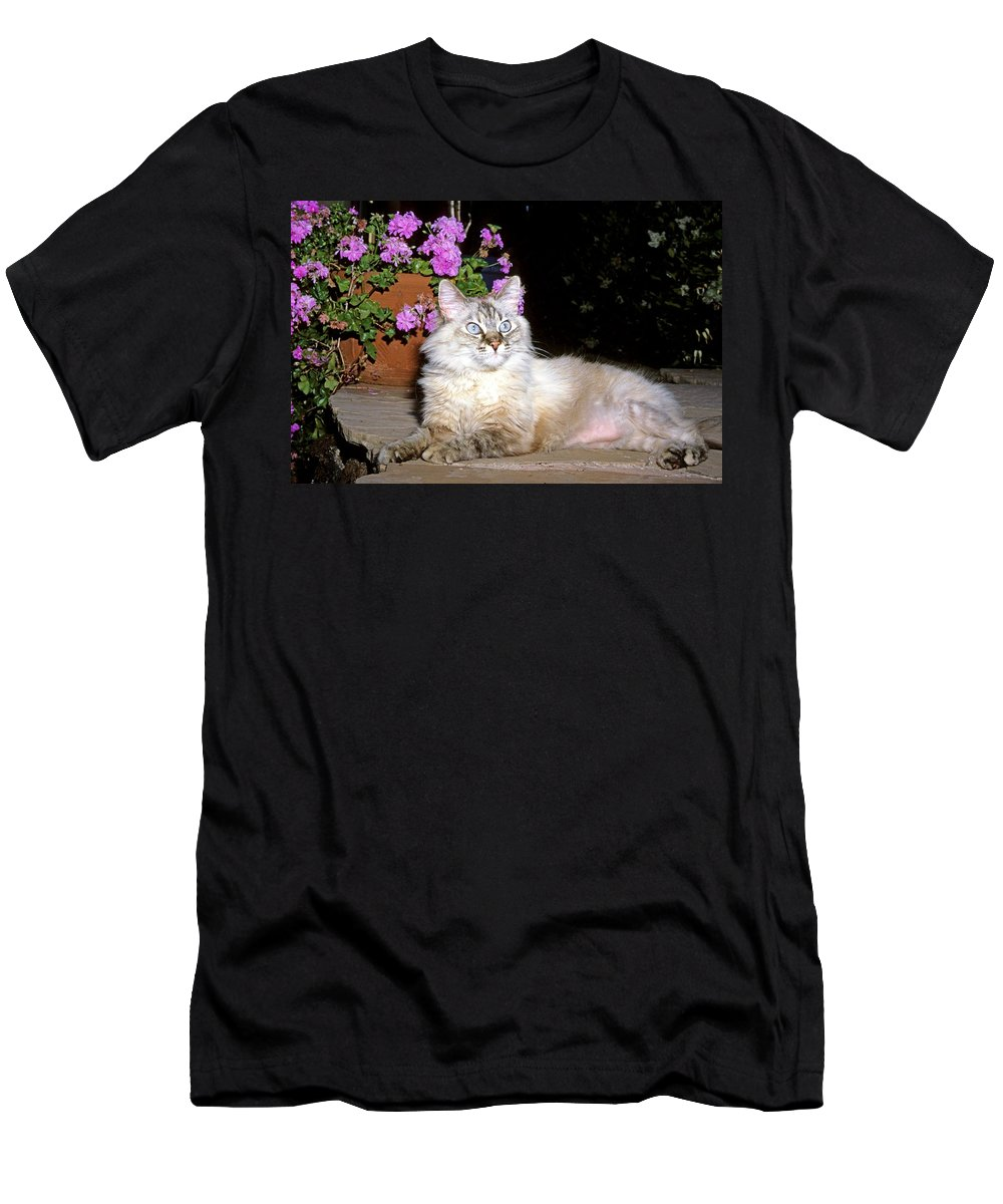 Mixed Breed Cat Men's T-Shirt (Athletic Fit) featuring the photograph Backyard Beauty by Larry Allan