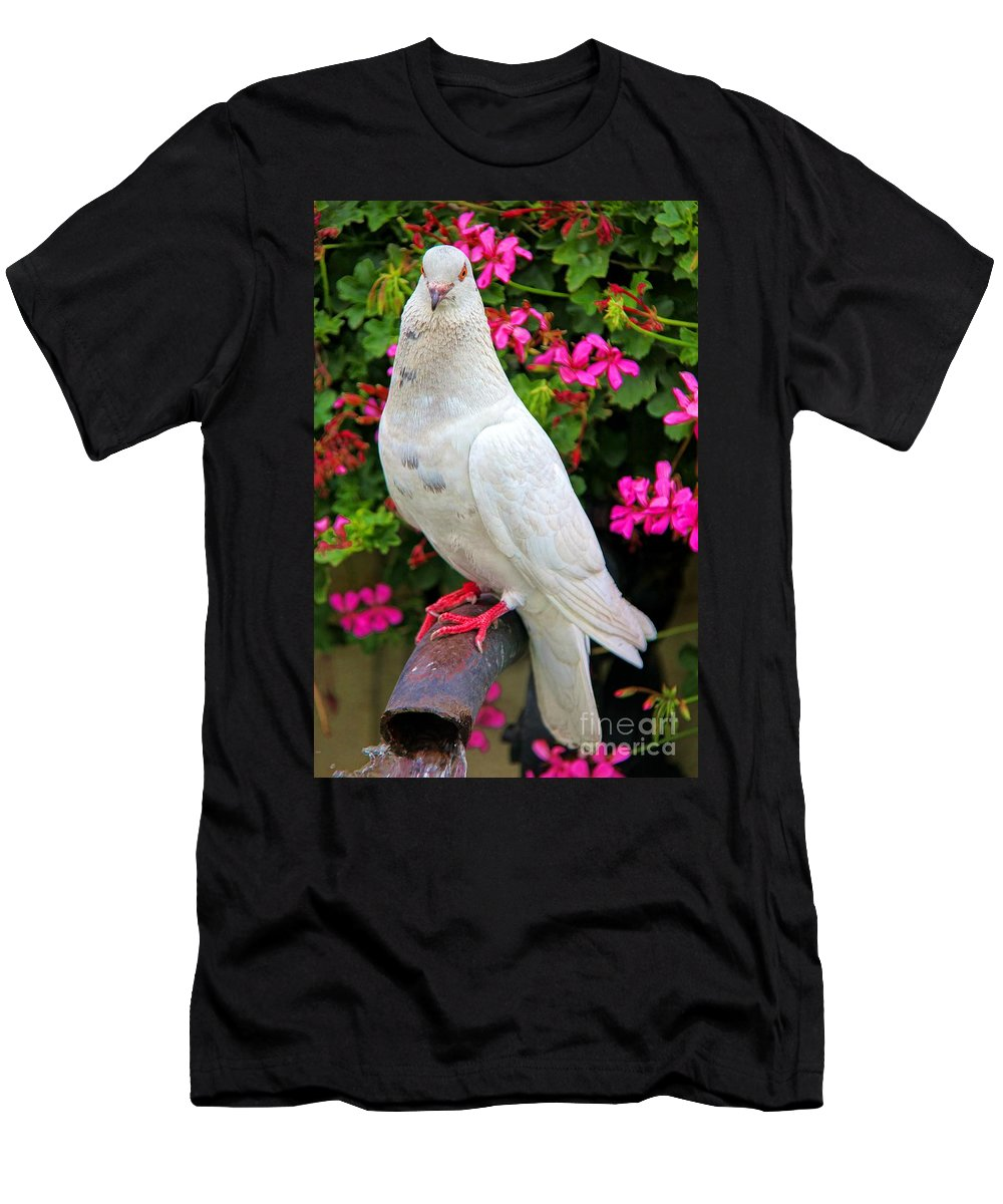 Beautiful White Pigeon Men's T-Shirt (Athletic Fit) featuring the photograph Beautiful White Pigeon by Mariola Bitner