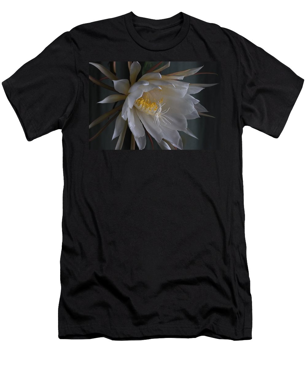 Nature Men's T-Shirt (Athletic Fit) featuring the photograph Big Night Out by Susan Capuano