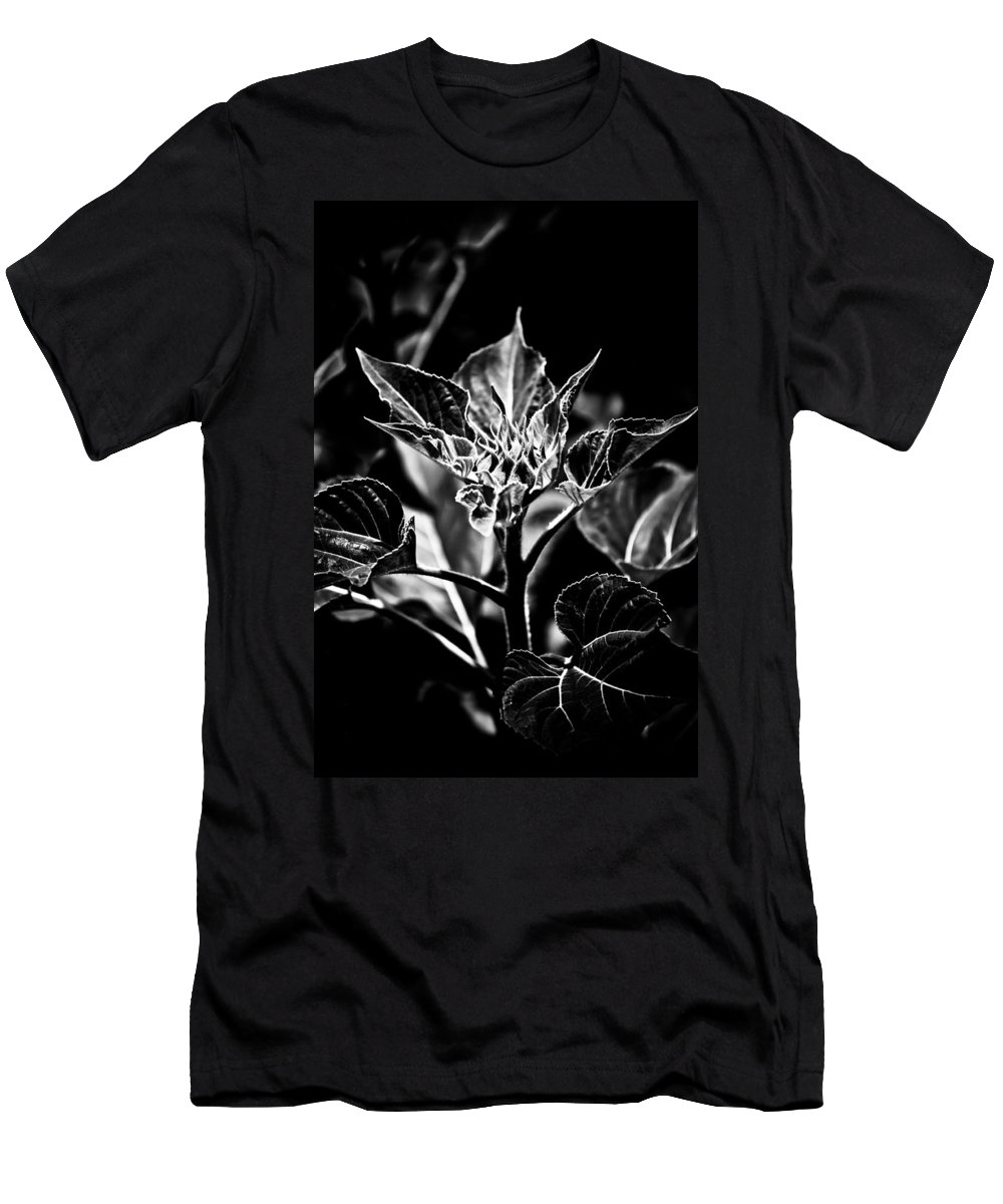 Expressionism Men's T-Shirt (Athletic Fit) featuring the photograph Budding Sunflower by Hakon Soreide