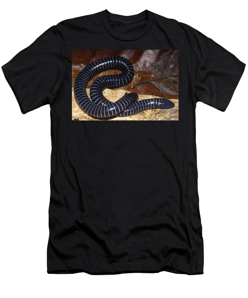 South American Caecilian Men's T-Shirt (Athletic Fit) featuring the photograph Caecilian by Dante Fenolio