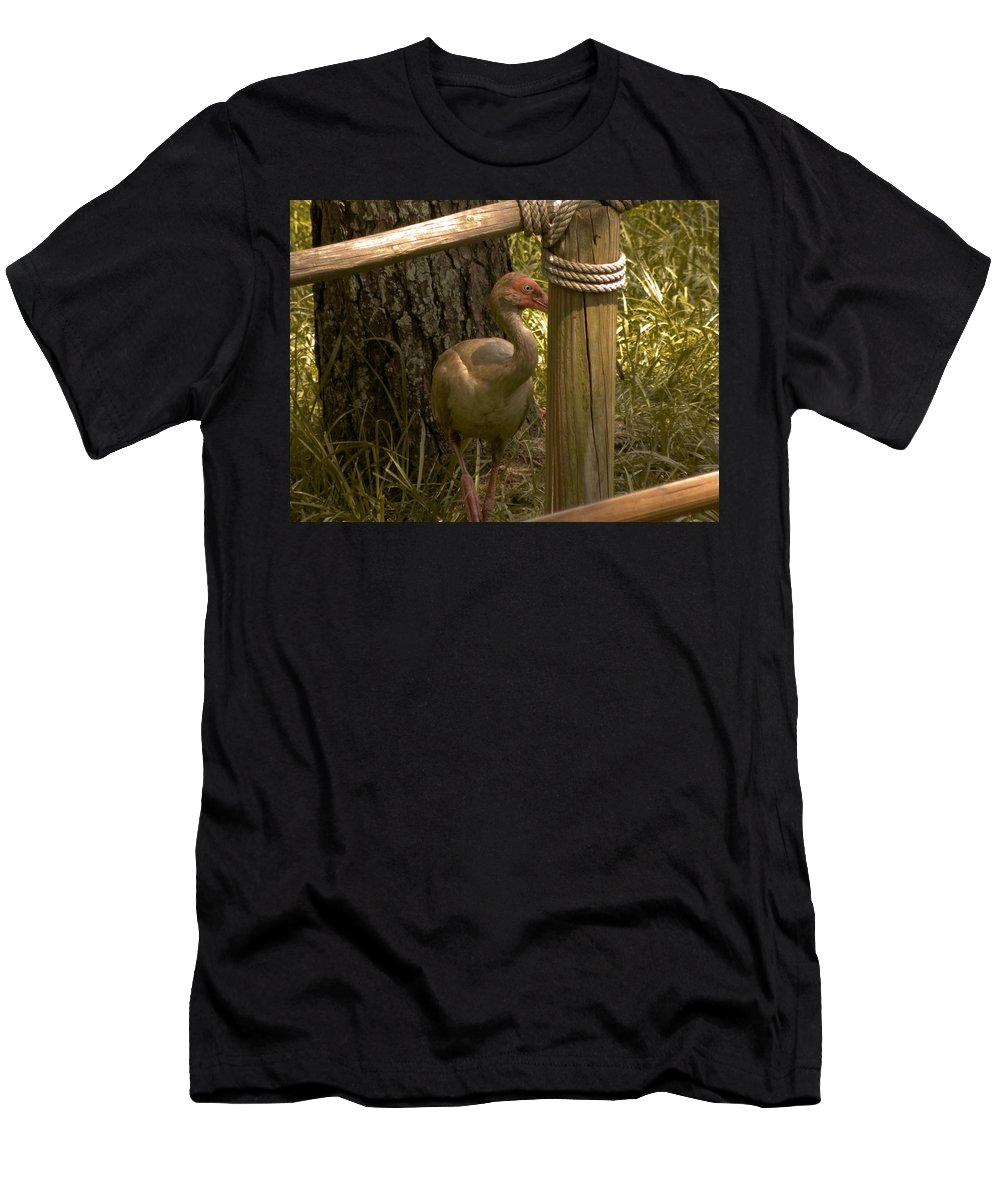 Bird Men's T-Shirt (Athletic Fit) featuring the photograph Cagney by Trish Tritz