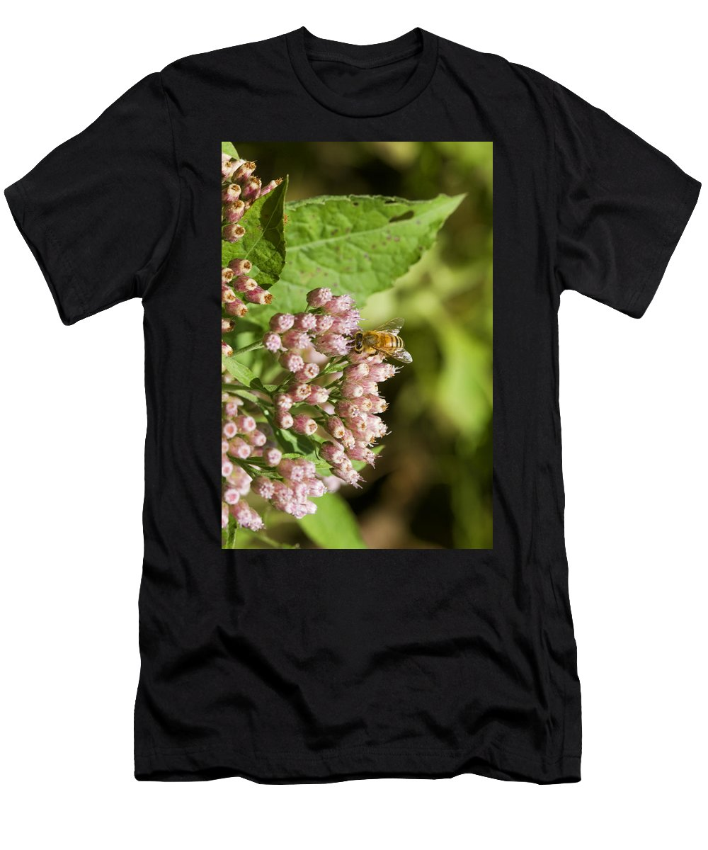 Pluchea Camphorata Men's T-Shirt (Athletic Fit) featuring the photograph Camphorweed Wildflowers And Honey Bee by Kathy Clark
