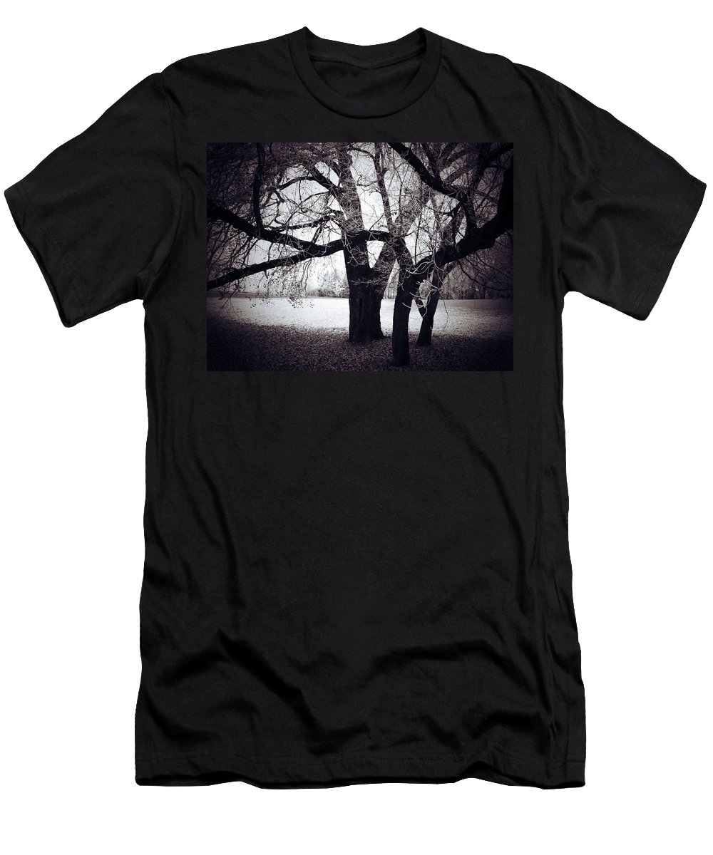 Elm Framed Prints Framed Prints Men's T-Shirt (Athletic Fit) featuring the photograph Captions Cradle by The Artist Project