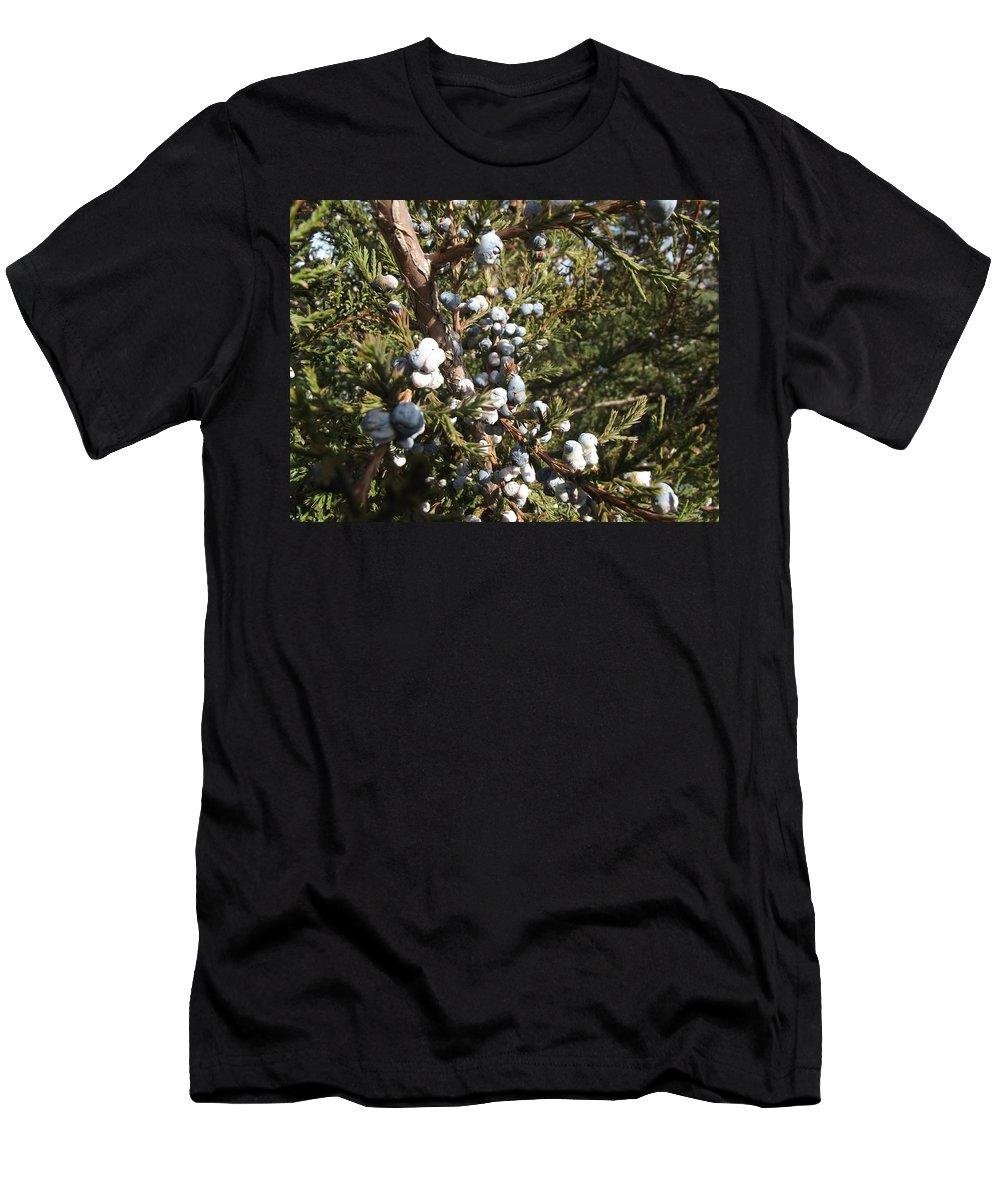Cedar Men's T-Shirt (Athletic Fit) featuring the photograph Cedar Blue by Bonfire Photography