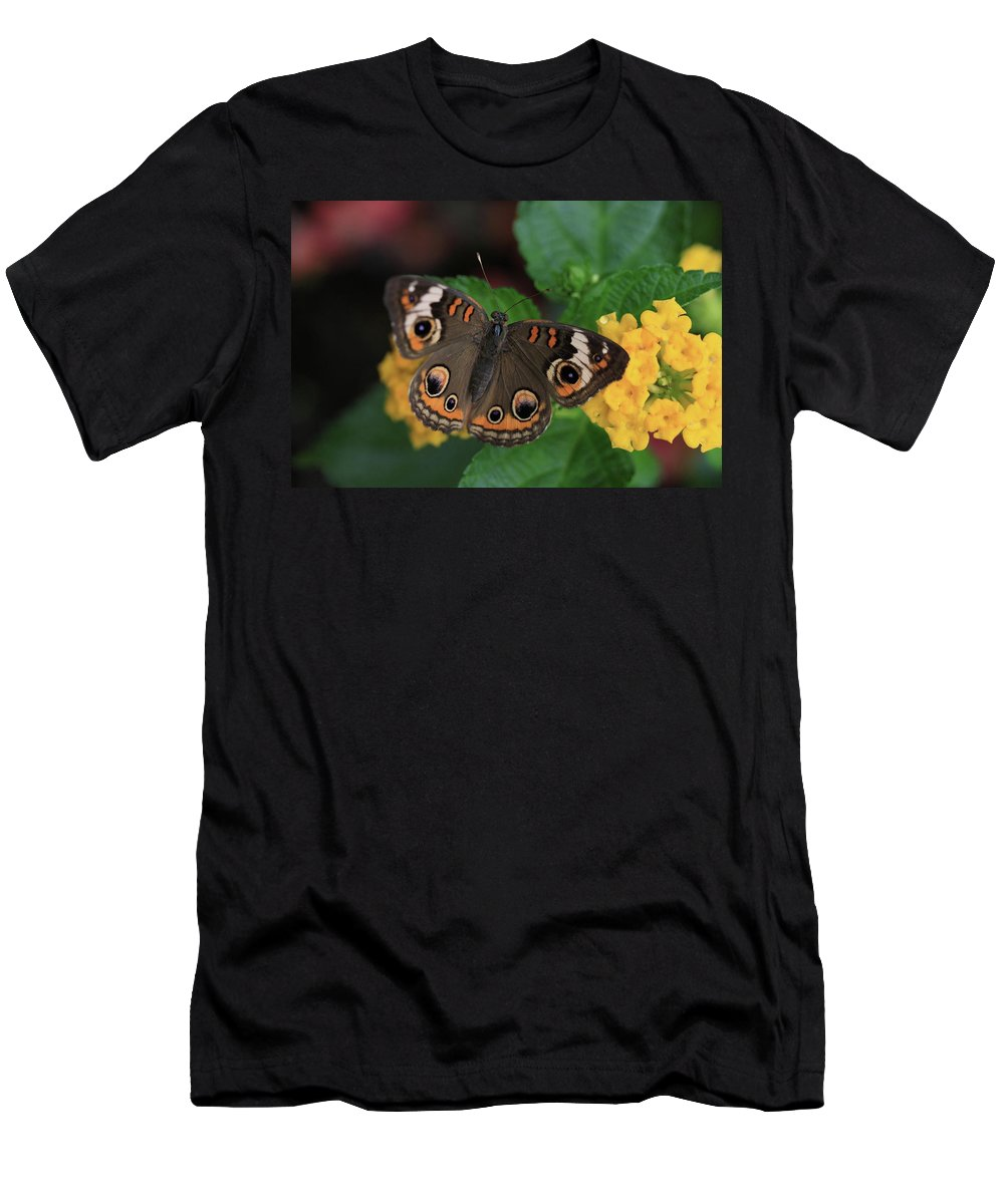 Butterfly Men's T-Shirt (Athletic Fit) featuring the photograph Common Buckeye by Rick Berk