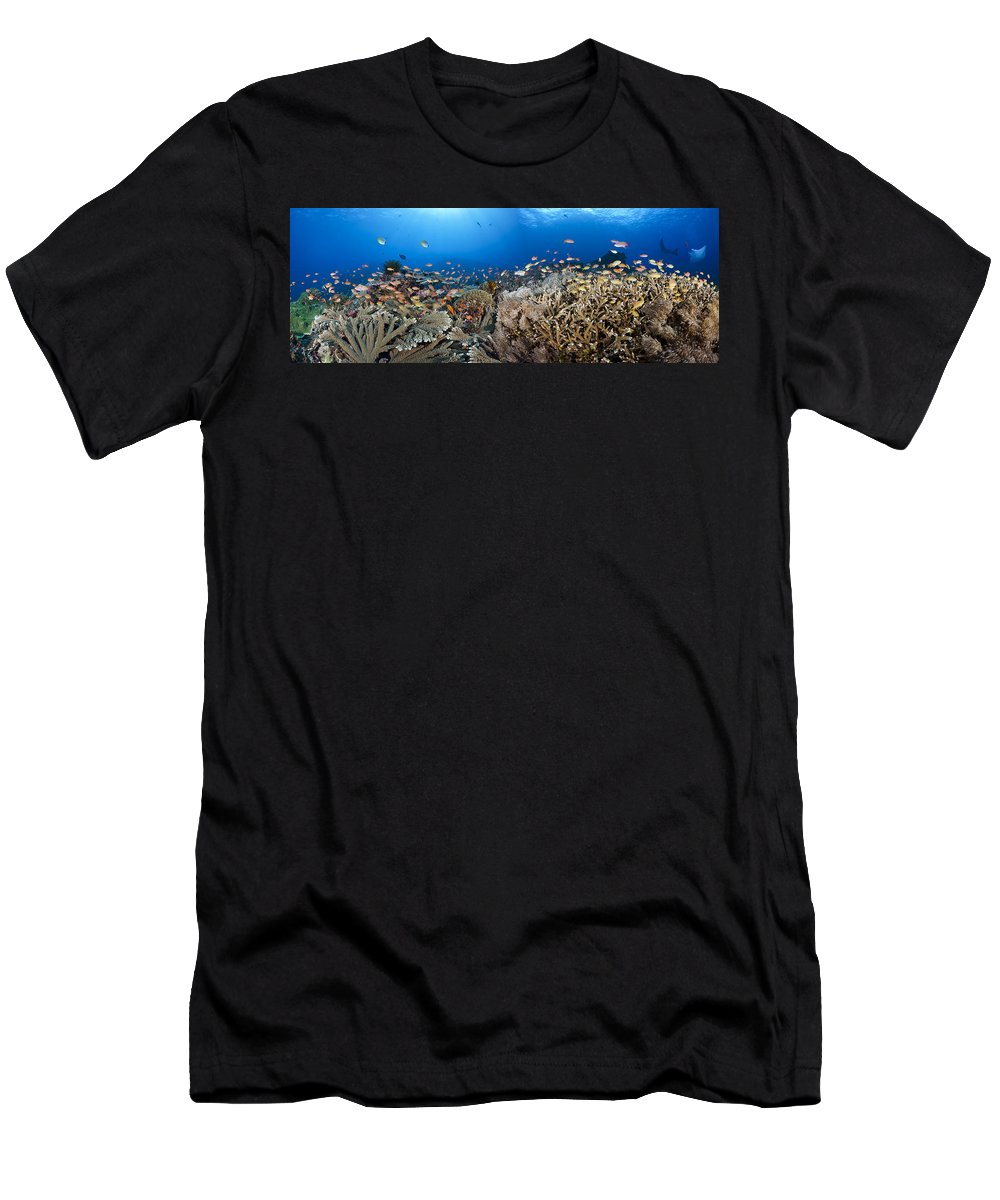 Animal Men's T-Shirt (Athletic Fit) featuring the photograph Crystal Bay Panorama by Dave Fleetham