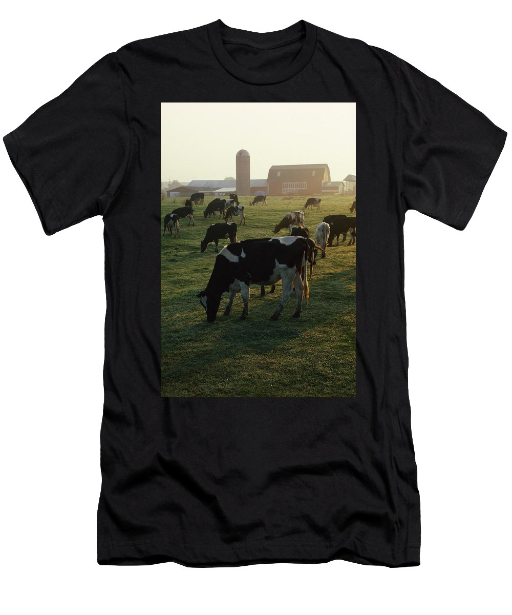 Animal Men's T-Shirt (Athletic Fit) featuring the photograph Dairy Cattle Grazing by Natural Selection David Spier