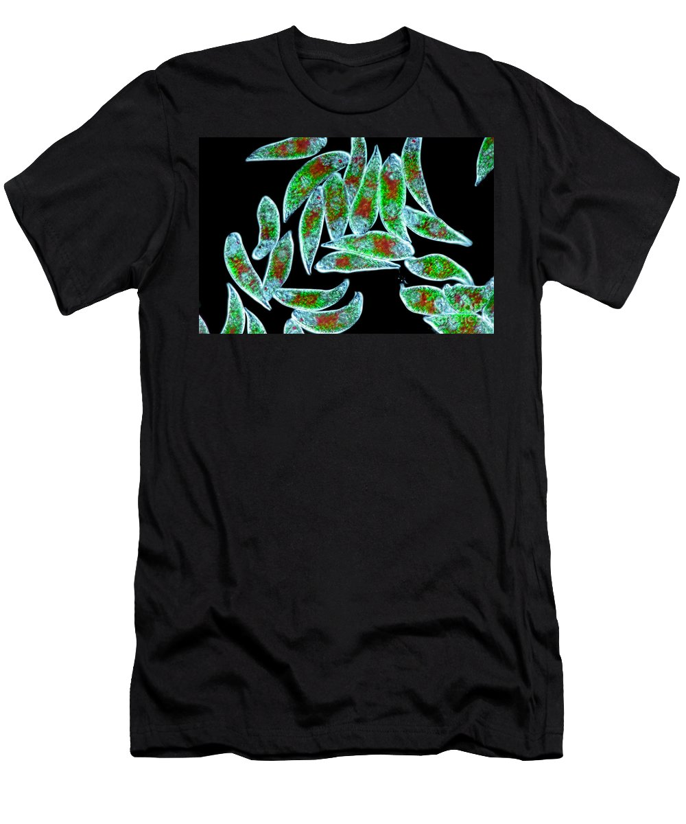 Cells Men's T-Shirt (Athletic Fit) featuring the photograph Euglena Rubra Dic by M I Walker