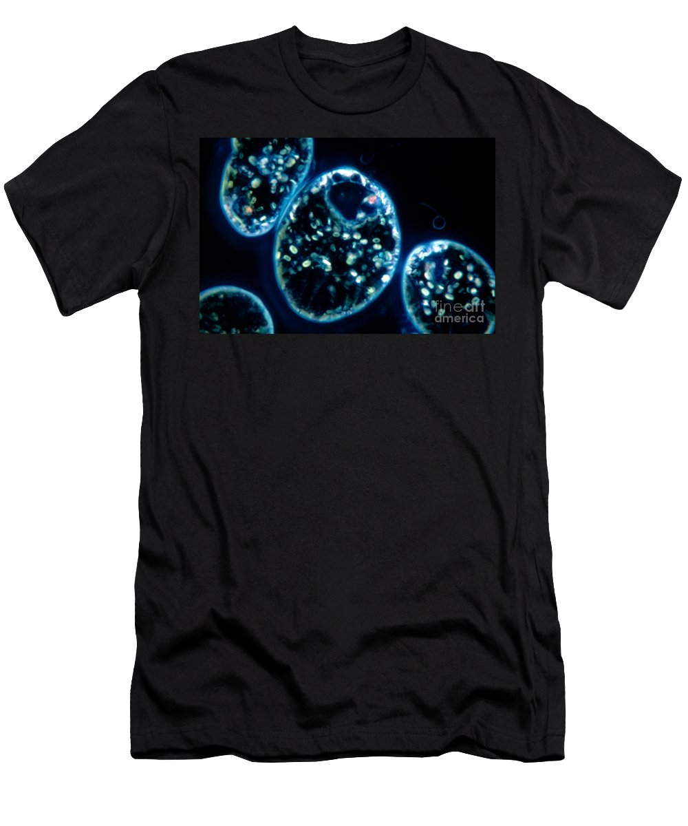 Euglena Viridis Men's T-Shirt (Athletic Fit) featuring the photograph Euglena Viridis by M. I. Walker