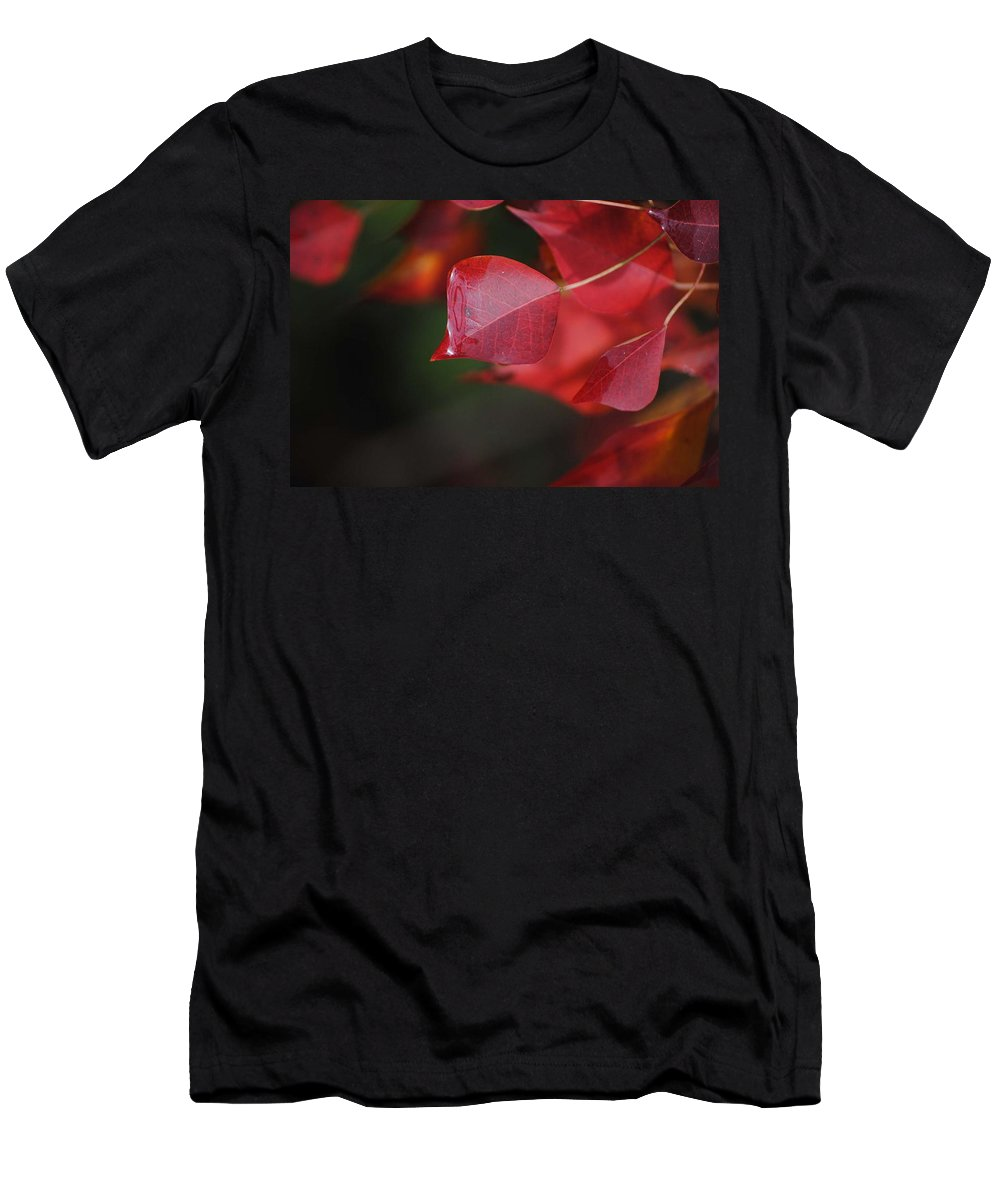 Pop Corn Tree Men's T-Shirt (Athletic Fit) featuring the photograph Fall Color Red by Charlie Day