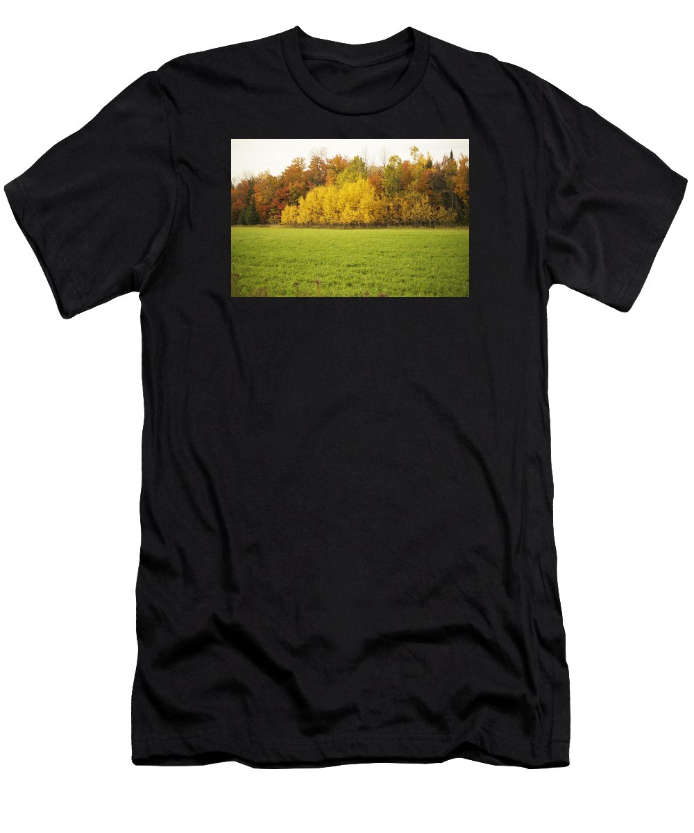 Fall Men's T-Shirt (Athletic Fit) featuring the photograph Fall Poplars by Elaine Mikkelstrup