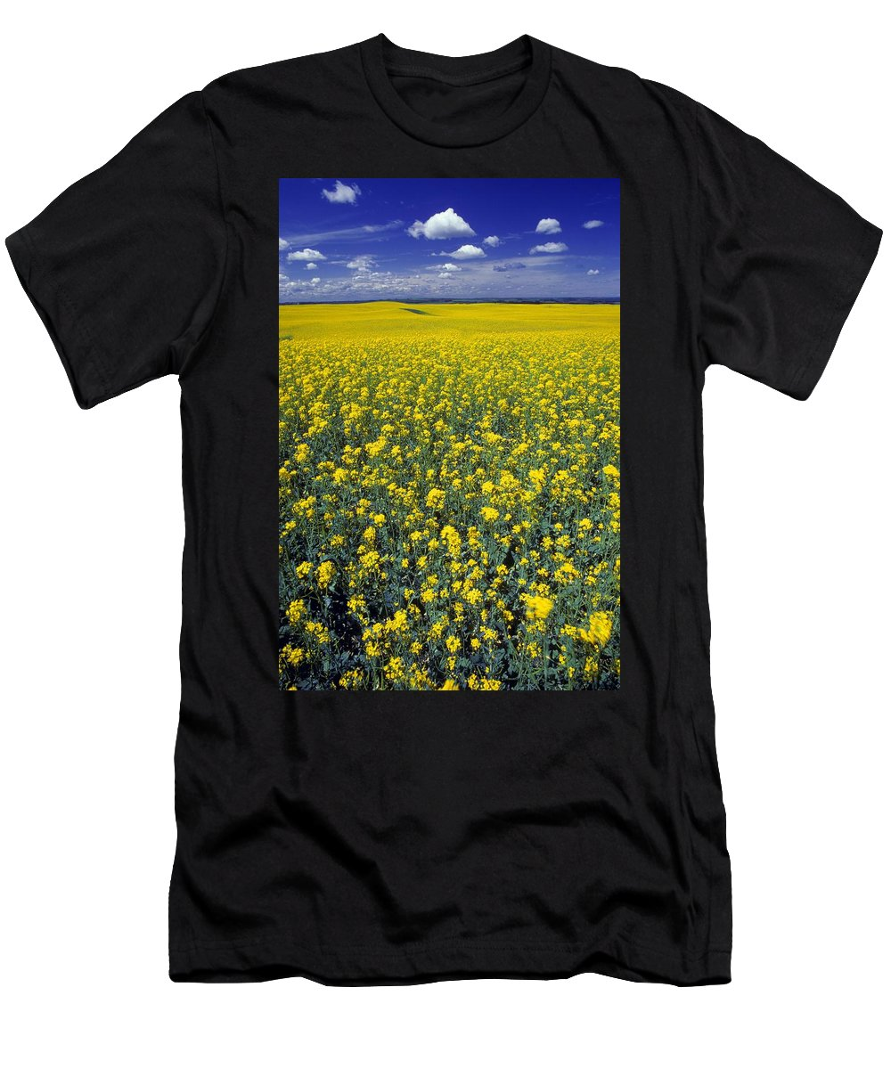 Agriculture Men's T-Shirt (Athletic Fit) featuring the photograph Field Of Canola by Don Hammond