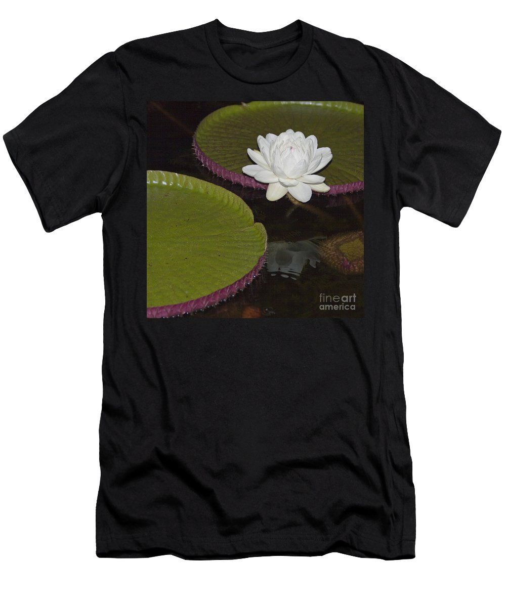 Victoria Men's T-Shirt (Athletic Fit) featuring the photograph Victoria Amazonica White Flower by Heiko Koehrer-Wagner