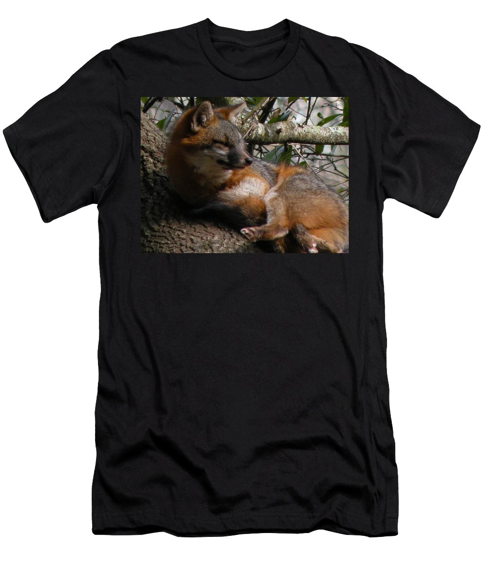 Zoo Men's T-Shirt (Athletic Fit) featuring the photograph Foxy's Naptime by Trish Tritz