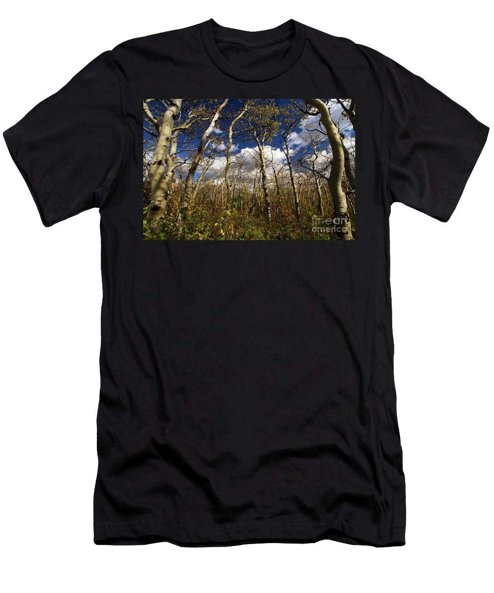 Aspen Trees Men's T-Shirt (Athletic Fit) featuring the photograph Glacier Aspens by Adam Jewell