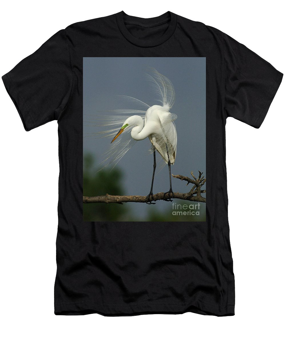 Great Egret Men's T-Shirt (Athletic Fit) featuring the photograph Great Egret by Bob Christopher