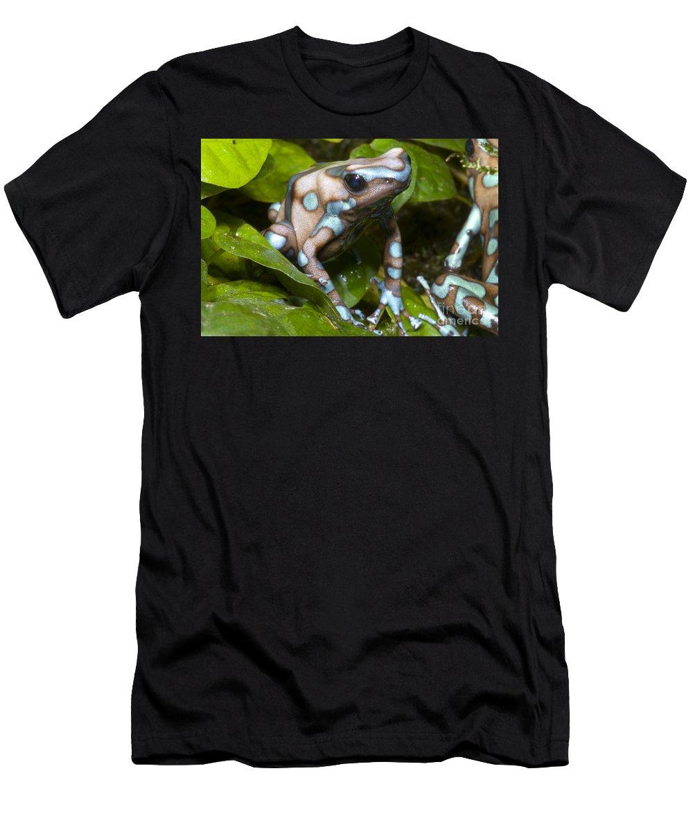 Dendrobates Auratus Men's T-Shirt (Athletic Fit) featuring the photograph Green And Black Poison Frog by Dante Fenolio