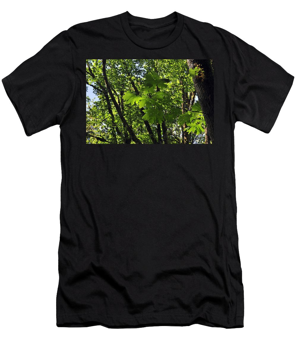 Gifford Pinchot Men's T-Shirt (Athletic Fit) featuring the photograph Green Canopy by Tikvah's Hope