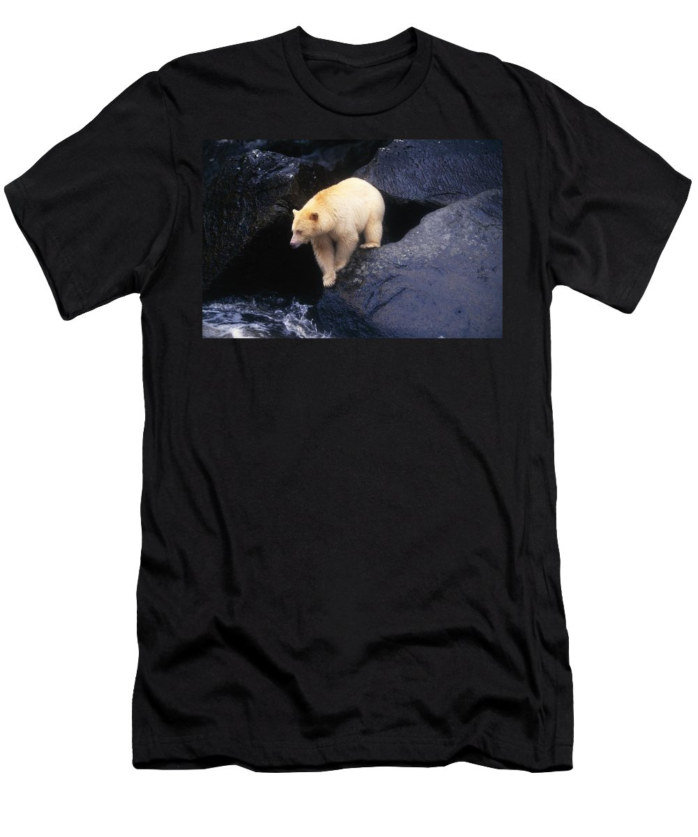 Animal Men's T-Shirt (Athletic Fit) featuring the photograph Kermode Bear On Boulder Hunting Salmon by Natural Selection David Ponton