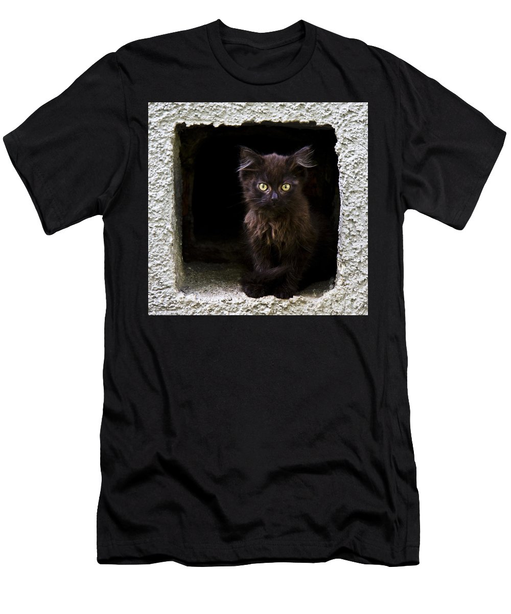 Cat Men's T-Shirt (Athletic Fit) featuring the photograph Kitten by Svetlana Batalina