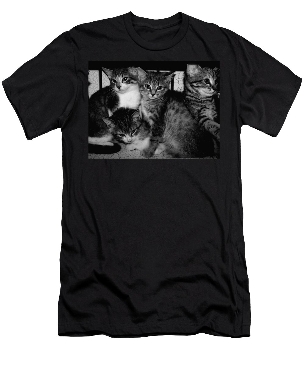 Digital Photos Of Cats Men's T-Shirt (Athletic Fit) featuring the photograph Kittens Corner by Christy Leigh
