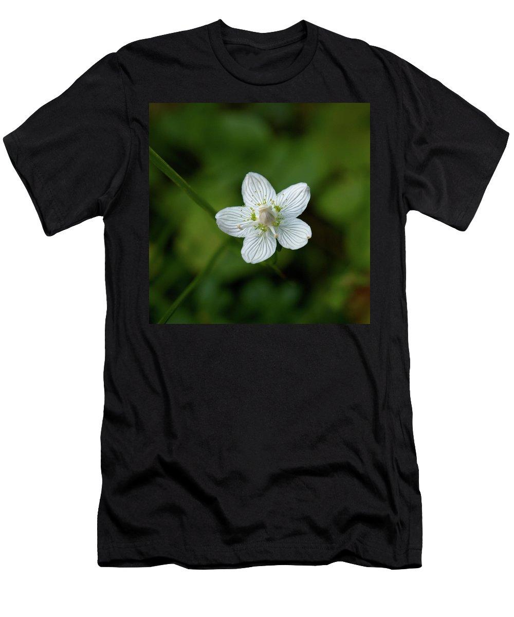 Jouko Lehto Men's T-Shirt (Athletic Fit) featuring the photograph Marsh Grass-of-parnassus by Jouko Lehto