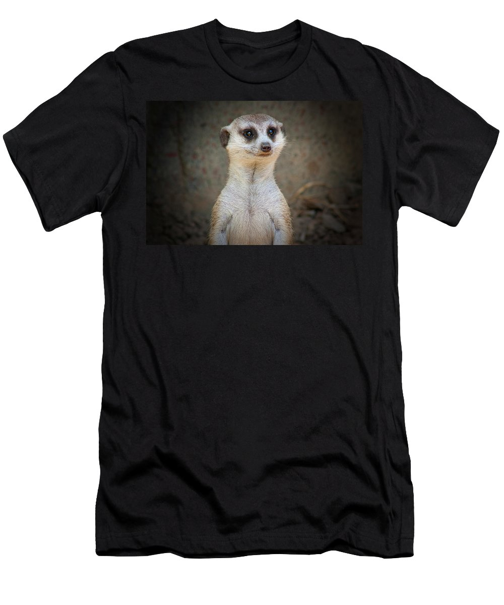 Meerkat Men's T-Shirt (Athletic Fit) featuring the photograph Meerkat Manor by Douglas Barnard