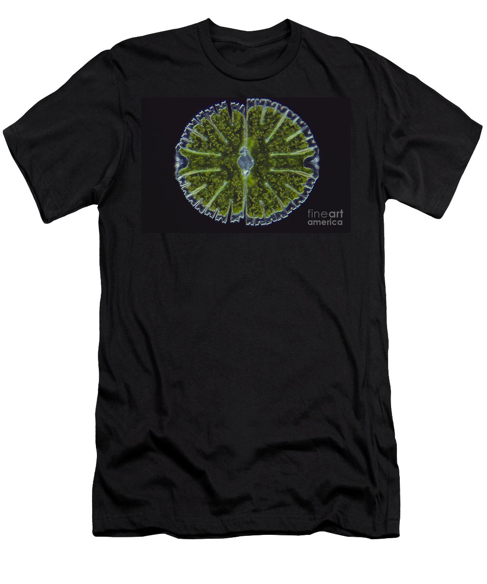 Science Men's T-Shirt (Athletic Fit) featuring the photograph Micrasterias Sp. Algae Lm by M. I. Walker