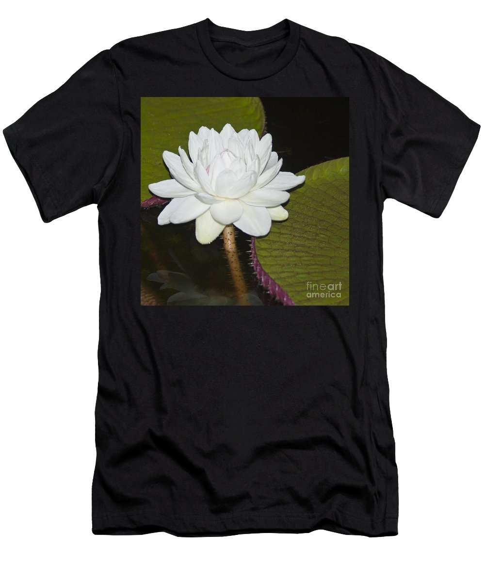 Victoria Men's T-Shirt (Athletic Fit) featuring the photograph Nocturnal Blossom Of Victoria Lily by Heiko Koehrer-Wagner